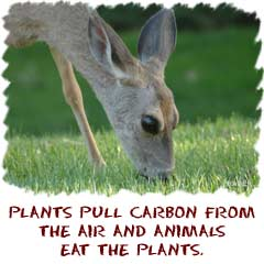 plants pull carbon from the air and animals eat the plants